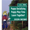 Puppy Socialization Group Night